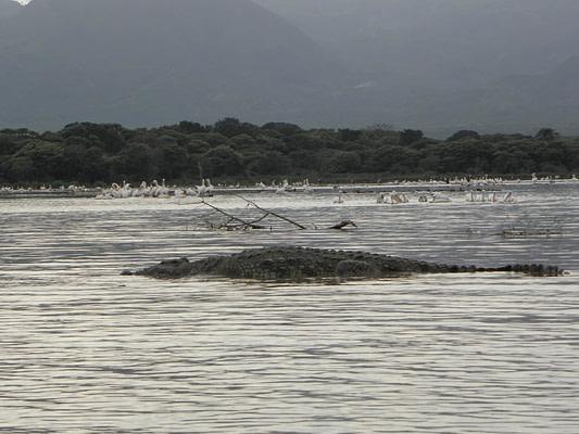 travel-ethiopie-crocodiles-lac-chamo