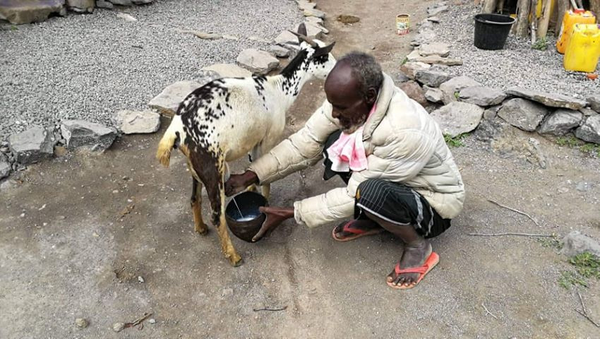 goat milking at Daoud