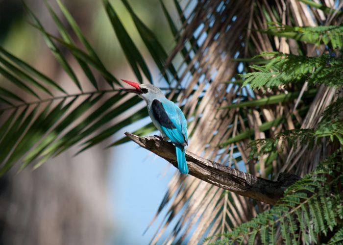 greyheadfisher-awasa-ethiopia_t20_4Jm9a8